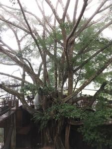 ต้นไม้ยักษ์